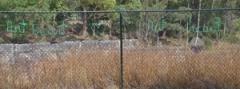 "Feyona van Stom - ""The Writing on the Fence"""