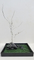 CarmelMollison_Tree_of_Life