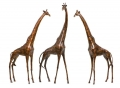 Giraffes Edition of 9