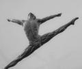Li Cunxin - 'Fly'
